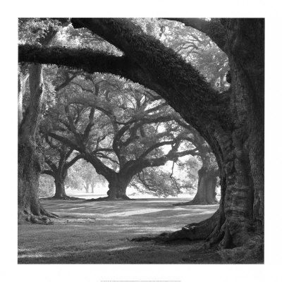 oak_alley.jpg